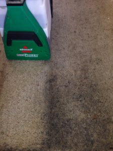 Professional Carpet Cleaning Company in Auckland
